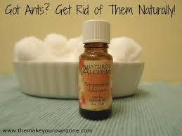 5 Natural Ways To Get Rid Ants In The House