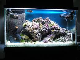 65 Gallon Aquascaping | REEF2REEF Saltwater And Reef Aquarium Forum 75 Gallon Tank Aquascape Ideas Please Reef Central Online Community Minimalist Aquascaping Page 3 2reef Saltwater And How To A Aquarium Youtube Tank Rockscape To Drill Cement Your Live Rock Gmacreef Columns In A Saltwater Callorecom Pieter Van Suijlekoms Revisited Is There Science Live Rock Sanctuary The Why I Involuntarily Redid My Mr 7