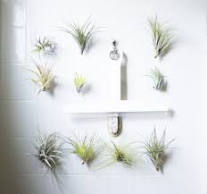 Best Plant For Bathroom by Bathroom Bathroom Plants Online 520455 1104 997 Plants For