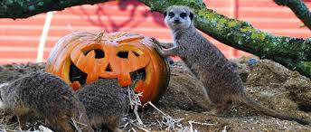 Halloween Theme Park Uk by Halloween Events In Hampshire 2017