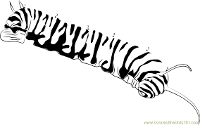 Monarch Caterpillar Coloring Page Pretmic Titans Pages