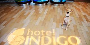 Best Type Of Flooring For Dogs by Hotels In San Diego California Gas Lamp Quarter Hotel Indigo Ihg
