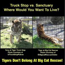 Zoo Wars ~ Tiger Truck Stop V Sanctuary | Top Cats Roar... Shocking Tiger Truck Stop Commercial Youtube New Photos Of 72011 Courtesy M Haik Free Stop Owner Plans To Pursue Another Tiger Stuff Tony For Stops Controversial Mascot Put Rest At The Yes There Really Is A The Stoplive Gas Station Louisiana Famous 2017 September 28 2015 2 Police Truck Carrying Skins From Buddhist Temple Keep Roaring For A Dodo Community Page Is Here Stay Vice