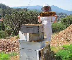Nucleus Colony -or- How To Start A Beehive: 8 Steps (with Pictures) Hive Time Products A Bee Adventure For Everyone Bkeeping Everything You Need To Know Start Your First Best 25 Raising Bees Ideas On Pinterest Honey Bee Keeping The Bees In Your Backyard Guide North Americas Joseph Starting Housing And Feeding Top Bar Beehive Projects Events Level1techs Forums 562 Best Images Knees 320 Like Girl 10 Mistakes New Bkeepers Make Splitting Hives Increase Cookeville Bkeepers Nucleus Colony Or How A 8 Steps With Pictures