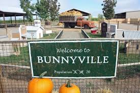 Colorado Pumpkin Patch Farm Camp by This Is The Best Pumpkin Patch In New Mexico To Visit This Fall