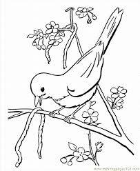Coloring Pages 03 Spring 20 Animals Birds