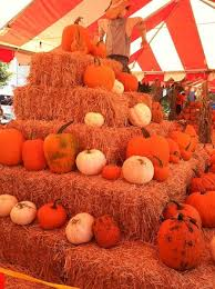 Best Pumpkin Patch Snohomish County by 50 Best Pumpkin Patch Activities Images On Pinterest Pumpkins