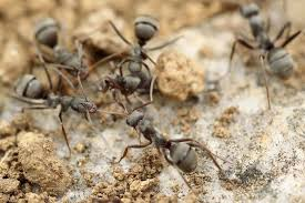 Flying Ants In Bathroom Window by How To Get Rid Of Ants Ants In My House