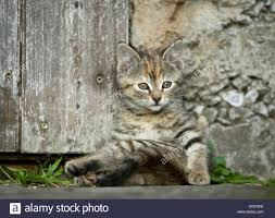 Brown-tabby Kitten, Farm Cat, Sitting In Front Of A Barn Door ... Ferals Strays And Barn Cats Cat Tales Tuesdays Fun And Aww My Moms Is Gorgeous Viralspell The Care Feeding Of Timber Creek Farm Program Buddies Seeking Support For Its Catsaving Efforts Adoption Barn Cats Near Bardstown Ky Petfinder For Green Rodent Control Turn To Barn Cats The Flying Farmers Free Images Wood Old Animal Cute Wall Pet Rural Sitting On Top Of Bales Straw Ready To Pounce Stock Weve Got Hire Central Missouri Humane Society By Jsf1 On Deviantart
