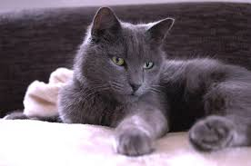 renal failure in cats what is difference between renal and kidney failure cat world