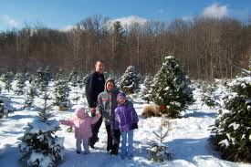 Fraser Christmas Tree Farm Ri by About Us