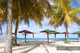 100 Wooden Parasols Caribbean Sea Antigua Wooden Parasols And Palms On Beach
