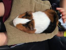 Can Guinea Pigs Eat Salted Pumpkin Seeds by Lavender Sugar Cookies Recipe Story Of A Kitchen