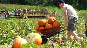Pumpkin Picking Farm Long Island Ny by Fall Fun In And Around Nyc Apple And Pumpkin Picking Corn Mazes