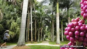 Mckee Botanical Gardens Vero Beach Florida
