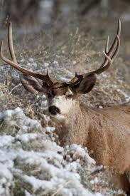 Shed Hunting Utah 2014 by Backcountry Utah Outdoor Adventure Journal