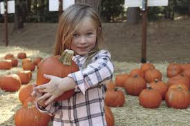 Apple Hill Pumpkin Patches Ca by Fall Season Has Arrived Locals Visit Apple Hill For Autumn Fun