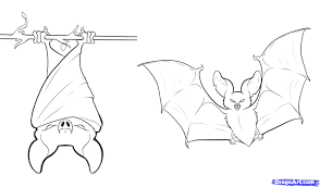 How To Draw Bats Step By Forest Animals FREE