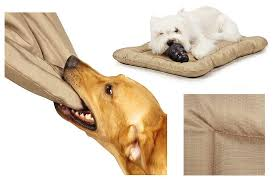 Chew Resistant Dog Bed by Choosing A Chew Proof Dog Bed Washabledogbed Net