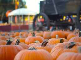 Underwood Farms Pumpkin Patch Hours by Best Pumpkin Patches In Los Angeles For Halloween