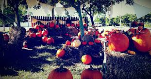 Pumpkin Patch Church Tallahassee by Capestyle Magazine Online Page 3 Of 62 This Is The Official