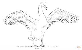 Click The Mute Swan With Wings Open Coloring Pages
