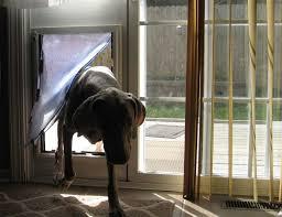 Best Pet Doors For Patio Doors by Best 25 Dog Door Insert Ideas On Pinterest Miniature Dogs