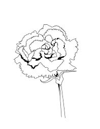 Spain National Carnation Flower Colouring Page