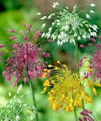 i this combo of silver artemisia fragrant burgundy allium