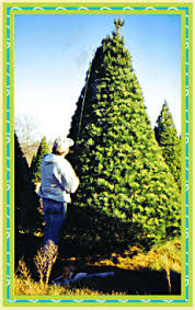 Pinecrest Christmas Tree Farm by Happy Holidays From Pinecrest