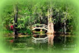 Little White Bridge In Magnolia Gardens Charleston Sc graph