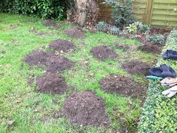 Fast, Efficient Removal Of Any Pests From Homes And Businesses How To Get Rid Of Moles Organic Gardening Blog Cat Captures Mole In My Neighbors Backyard Youtube Animal Wikipedia Identify And In The Garden Or Yard Daily Home Renovation Tips Vs The Part 1 Damaging Our Lawn When Are Most Active Dec 2017 Uerstanding Their Behavior Mole Gassing Pests Get Correct Remedy Liftyles Sonic Molechaser Alinum Covers 11250 Sq Ft Model 7900