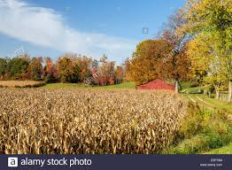Ripe Corn Field And Red Barn Near Spraytown, Indiana, USA Stock ... Farm House 320 Acres Big Red Barn For Sale Fairfield The At Devas Haute Blue Grass Vrbo Fair 60 Decorating Design Of Best 25 Barns Ideas On Pinterest Barns Country And Indiana Bnsfarms Etc A In Water Color Places To Visit Nba Partners With Foundation For 2015 Conference I Lived A Dairy Farm When Was Girl Raised Calves 10 Michigan Wedding You Have See Weddingday Magazine