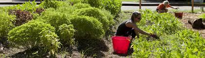 Master Gardener Volunteer Program UF IFAS Extension