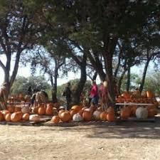 South San Jose Pumpkin Patch by Pumpkin Patch San Antonio Pumpkin Patches 8756 Hwy 151 San