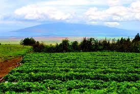 Pumpkin Patch Kula Hawaii by Maui Country Farm Tours U2026 Sharing Maui U0027s Agricultural Beauty The