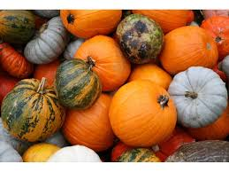 North Lawrence Pumpkin Patch by 2015 Long Island Pumpkin Picking Guide Rockville Centre Ny Patch