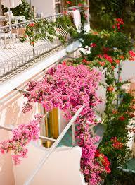 Pink Balcony Flowers In Positano Italy