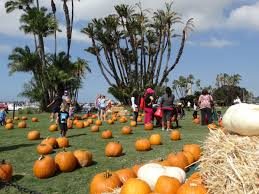 Pumpkin Patch San Jose 2015 by A Spooktacular Halloween Gallery San Diego County News Center