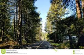 100 Truck Driver Lifestyle Trees US Route Driving Stock Photo Image Of