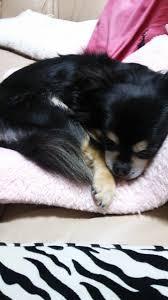 si鑒e assis debout inox スタッフのブログ ことに動物病院 札幌市西区の動物病院 犬 猫