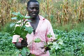 Types Of Pumpkins Grown In Uganda by I Have Grown Vegetables Since I Was 13 Daily Monitor