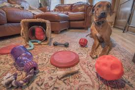 Do Redbone Coonhounds Shed by Marking Our Territory U2013 Page 37 U2013 Adventures Are Better With Dogs
