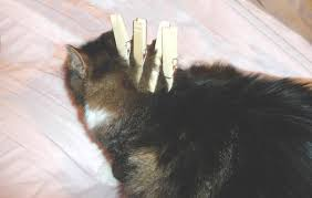 how to cut a cats nails cattips