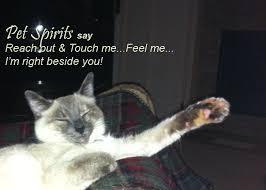 coping cat cat loss quote greiving cat loss inspirational cat