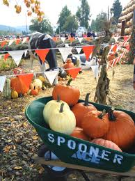 Spooner Farms Pumpkin Patch by The Pumpkin Patch Happiness Is