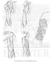 Netter S Anatomy Fresh Netters Coloring Book