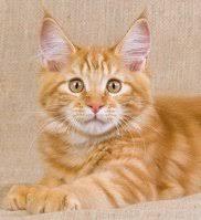 orange cat names cool kitten names