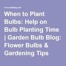best 25 when to plant bulbs ideas on planting bulbs