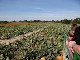 Pumpkin Patch Columbus Ga by Pumpkin Patch Picture Of Eckert U0027s Millstadt Farm Millstadt
